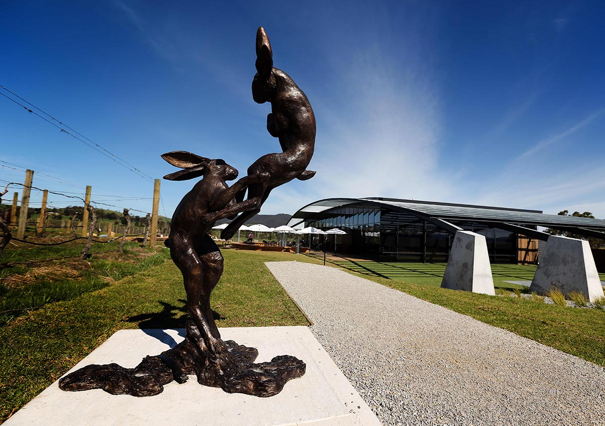 Nicole-Cleary-Photography-Ezard-Levantine-Hill-rabbits